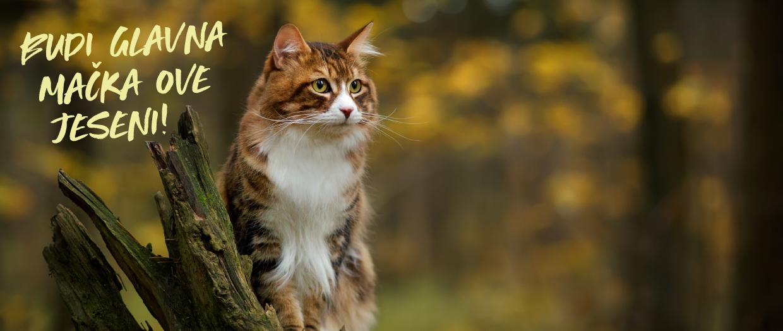 Budi glavna mačka ove jeseni