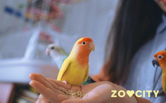 Danas je dan ptica kućnih ljubimaca