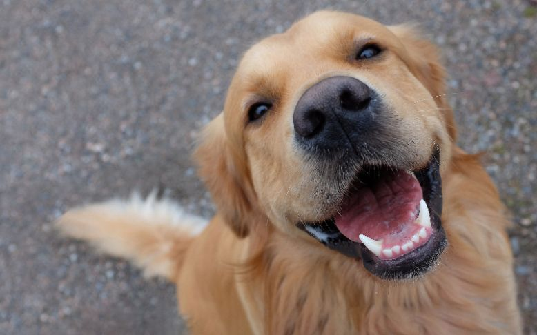 TOP 5 zdravih poslastica za pse