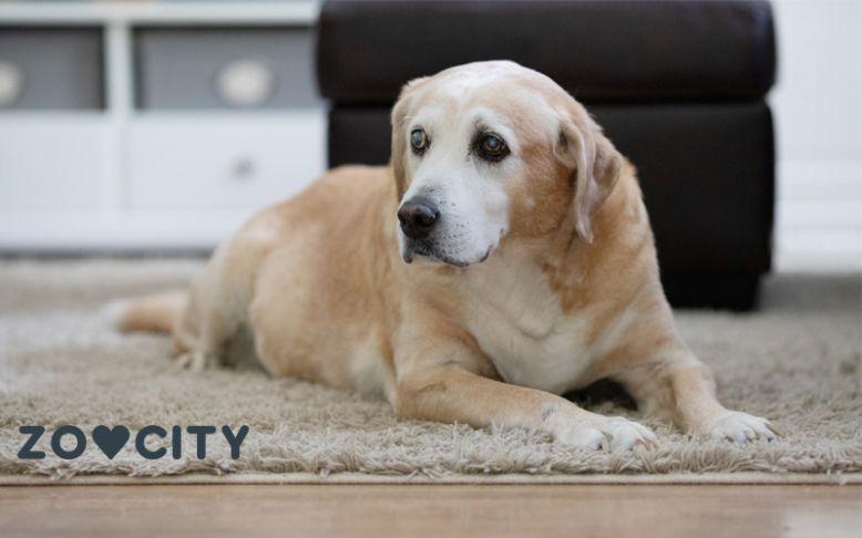 Život s gluhim ili slijepim psom