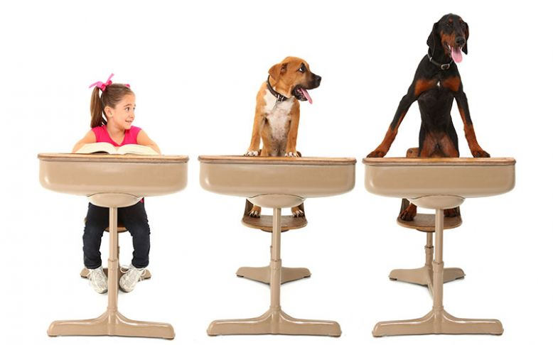 Kako trenirati psa od prvog dana