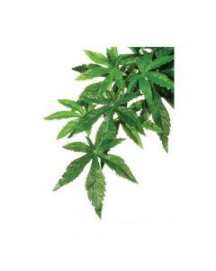 Hagen Exo Terra umjetna biljka Abutilon M