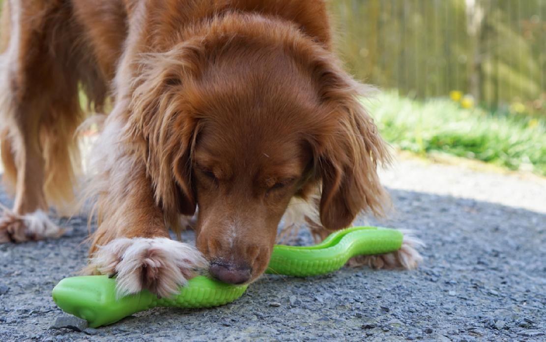 Interaktivne igračke za pse